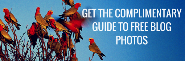 Complimentary Guide to Free Blog Photos